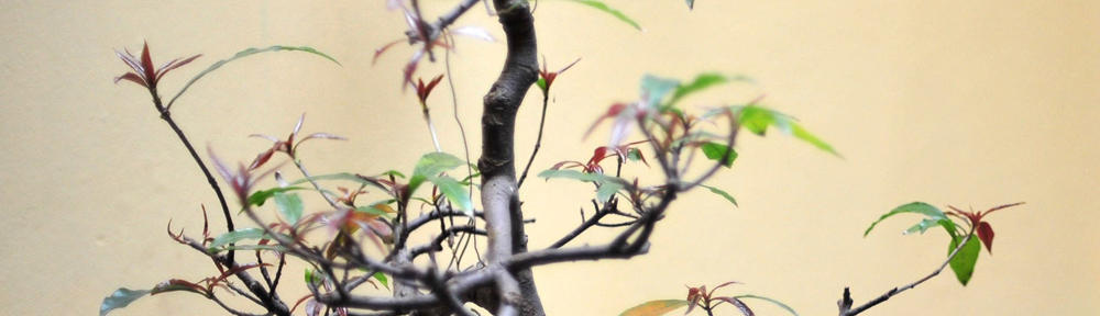 Obat Sipilis Herbal De Nature 3 Hari Sembuh